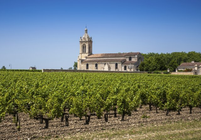 Grape field and old church behind. The typical landscape in Bordeaux region in France